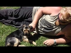 WISH Animal Rescue - Foster Carers of 2013