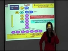 Elken Cambodia Marketing Plan By SAB Seng Yoke Yin Part 3