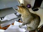 Stupid Cat Fighting Printer