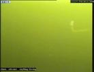 Une vidéo du imonstre du Loch Ness/i suédois